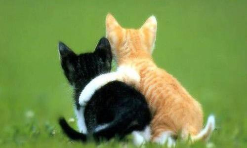 動物愛護週間限定☆アニマルコミュニケーション☆動物さんたちとの暮らし応援セッション