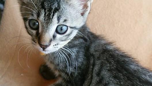 保護ネコ日記♪