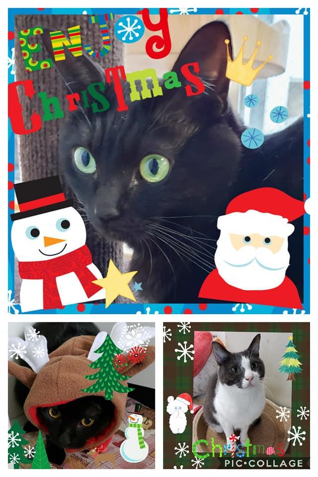 にゃんずクリスマスカード