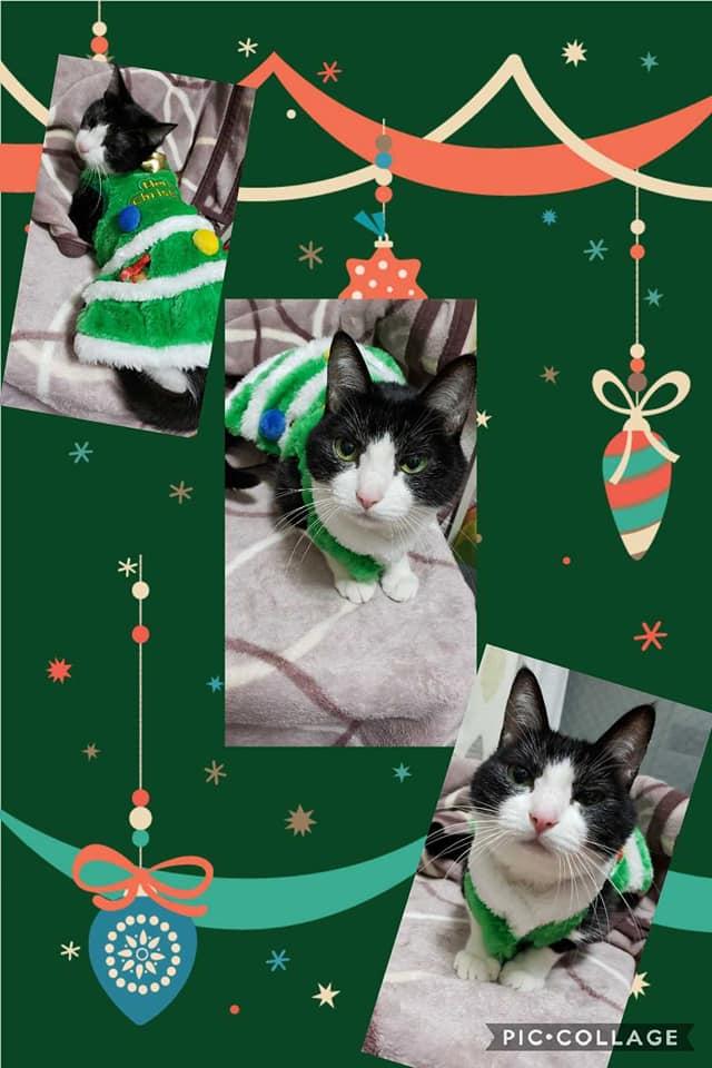 にゃんずクリスマスカード2