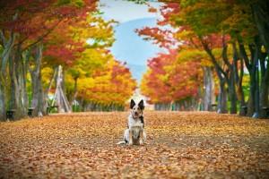 autumn-4470022_960_720