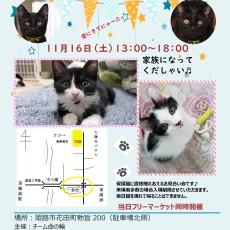 おちーびず姫路での保護猫お見合い会に参加します(*^-^*)