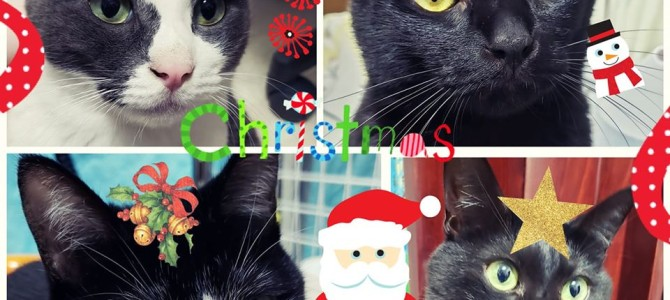 2019年最後の水曜日のつぶやき(*^-^*)だよ~ん♪Merry Christmas~!
